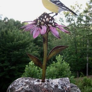 Goldfinch perched on cone flower